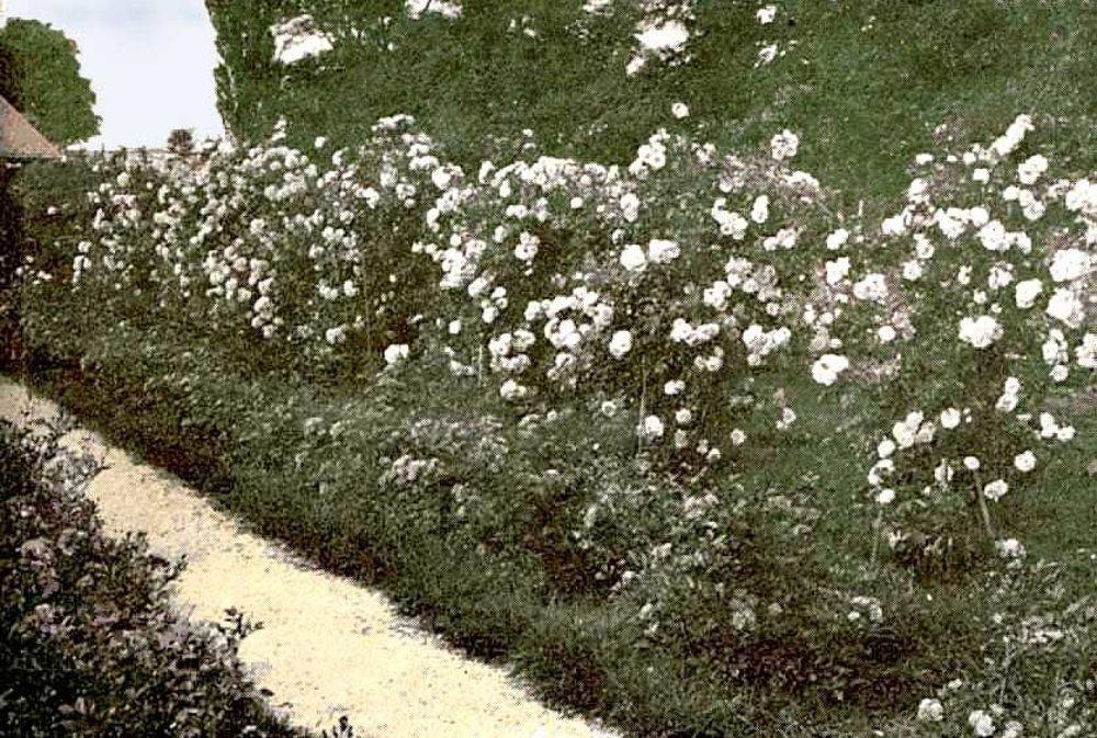Jedna z mála zachovaných fotografií grófkinho rozária.