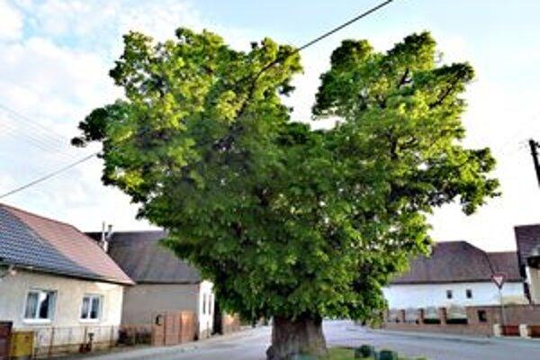 Medzi finalistami je aj strom z Kameničian.
