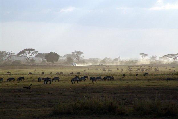 Africké safari v Keni je zárukou vysokej kvality.