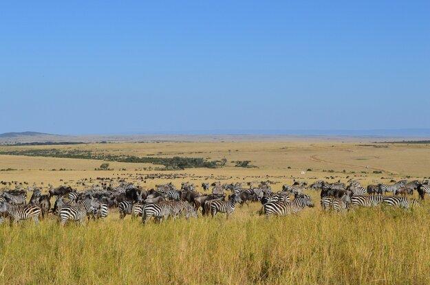 Keňa získala svetové ocenenie World´s Leading Safari Destination 2015