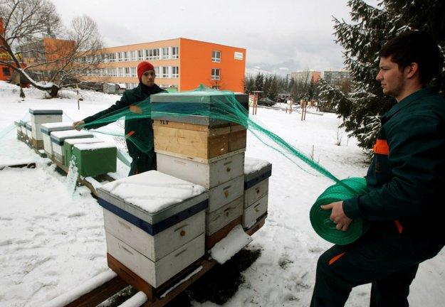 O včelstvá sa treba starať aj v zime.