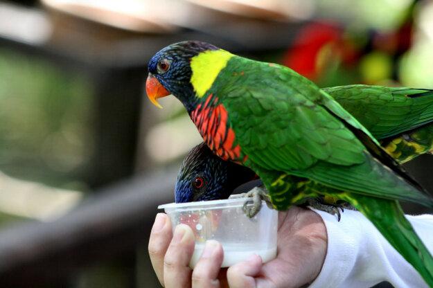 Vtáčí park Kuala Lumpur, Malajzia