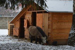 Všetky zvieratká môžu byť vonku počas celého roka.