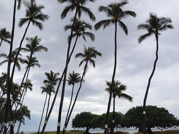Palmy na ostrove Maui