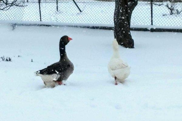 Sneh v Záhorskej Vsi.