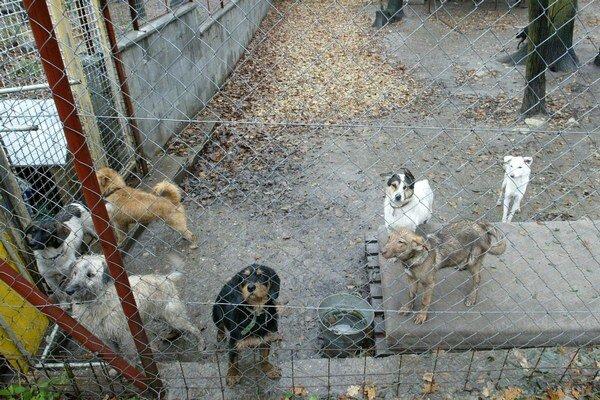 Pracovníci mestskej polície vlani odchytili 113 stratených, opustených alebo zabehnutých psov.
