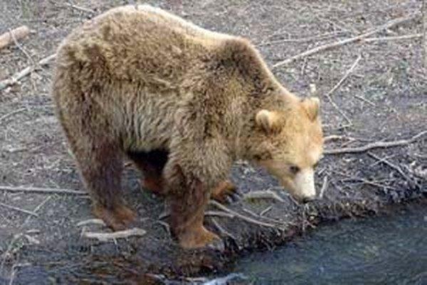 Podľa príbehu o medveďovi, ktorého vraj omylom pochovali mysliac si, že je to zavraždený človek, dostali Ružomberčania prezývku Medvedári.