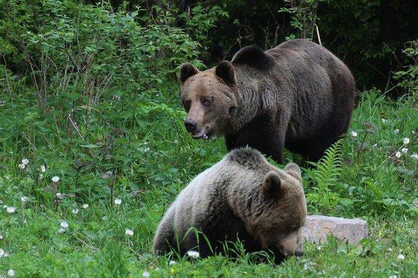 Na odháňanie medveďov sa snažia využívať viaceré spôsoby, ale zisťujú, že nie sú účinné. Medvede si vždy nájdu spôsob, ako sa dostať k úľom, do pivníc či k ovocným stromom. Bezradní ľudia potom len rátajú škody.