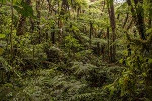 Les, v ktorom žaby objavili.