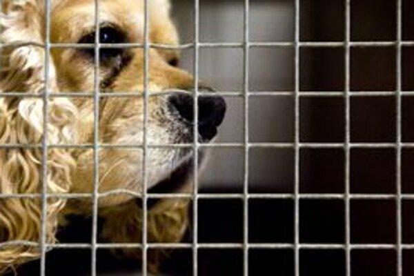 Psy odchytia a sterilizujú, o dva týždne sa však túlajú opäť.