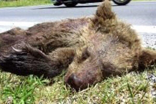 Medvieďa po páde na cestu zrazilo auto.