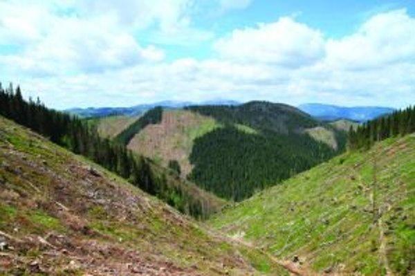V oblasti, v ktorej rástol ešte donedávna smrekový prales, zostala holina.