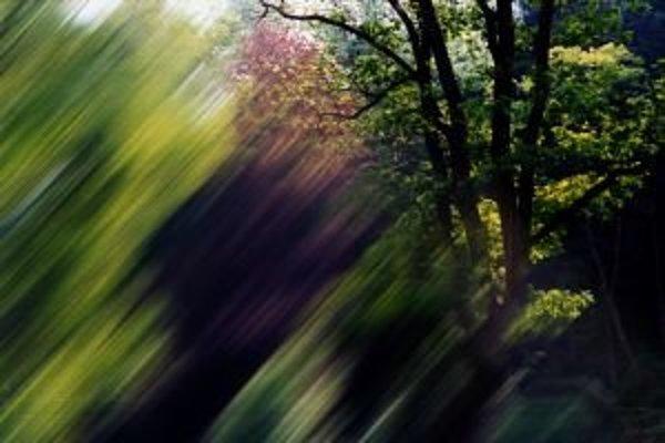 Fotografia z cyklu Les duchov.