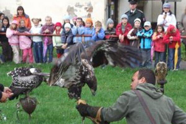 Deti zaujímalo,, ako sa dravce majestátne nesú na rukavici.