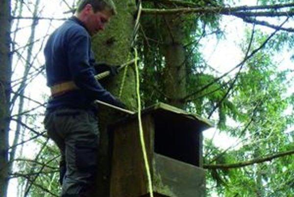 Dobrovoľníci sa šplhajú na vysoké stromy, aby tam namontovali aj tridsaťkilogramové vtáčie búdky. Tie vynášajú na stromy na vlastných chrbtoch.