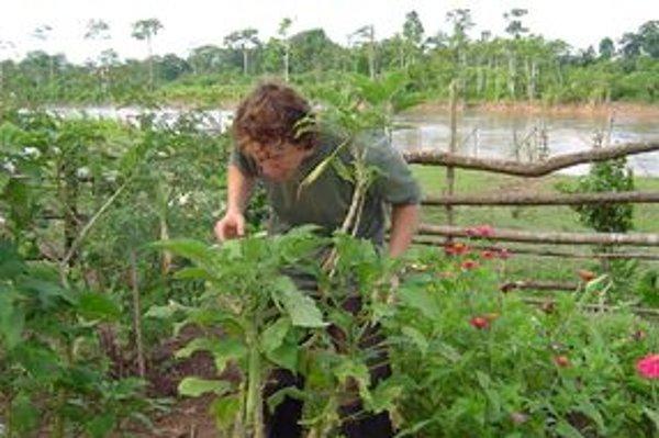 Mikulášan Dominik Plávka prežil v amazonskom pralese u rastlinoznalca Dona Roqueho niekoľko mesiacov a naučil sa spoznávať tajomný svet rastlín.