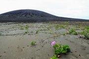 Prvé rastliny na mladom ostrove, pevninskej šiji. V pozadí je sopečný kužeľ.