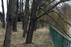 Stromy pri Hrone chcú rúbať už čoskoro.