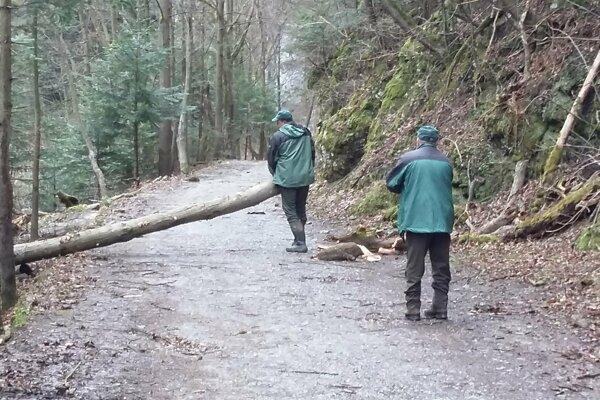 Lesníci tento rok plánujú obnoviť územie, ktoré v uplynulých rokoch zasiahli veterné a podkôrnikové kalamity.