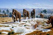 Zvieratá z obdobia starších štvrtohôr. Mamuty srstnaté sú v strede obrázku.