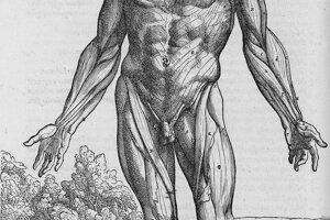 Siedmu knihu Vesalius venoval mozgu.