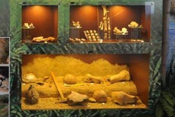 Paleontologické nálezy.