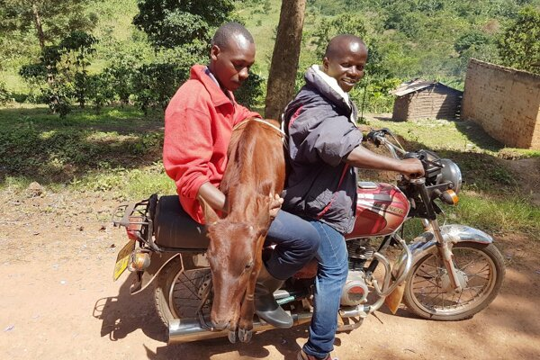 V Ugande.