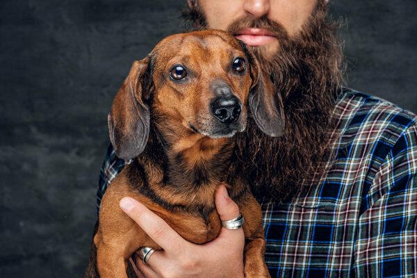 Vedci zisťovali, či je bezpečné, aby pes využíval rovnaký skener MRI ako človek.