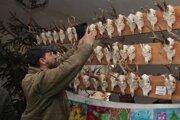 Výstava poľovníckych trofejí v Holíči.