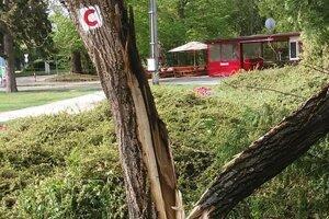 Rozčesnutý strom v parku.