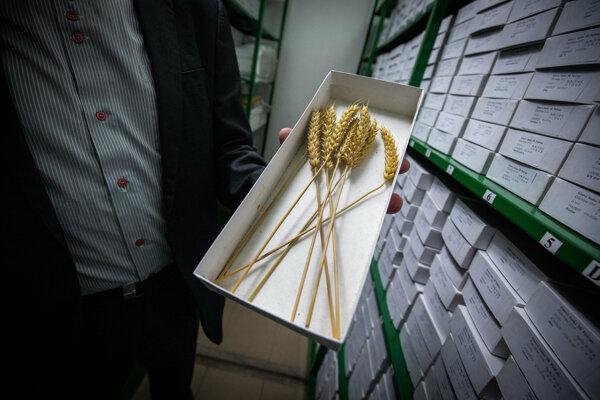 V Génovej banke SR sa uskladňujú a uchovovávajú semená rastlín pre prípady, že by ich bolo nutné obnoviť v prírode.