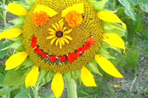 Slnečnice sú krásne kvety. V júli sa usmievajú a na jeseň majú smutné tváre.