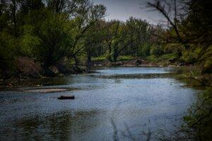 Voda v ramene je plytká, čo vyhovuje rybím škôlkam, ktoré neohrozujú dravce.