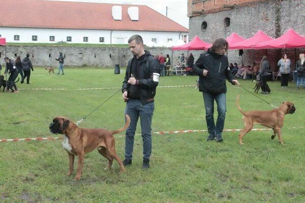 Na zámku v Holíči sa predviedli psí boxeri.