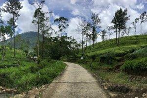 """Cesta """"do čaju"""", Nallathanniya."""