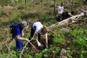 Výsadba stromčekov v Tatrách.