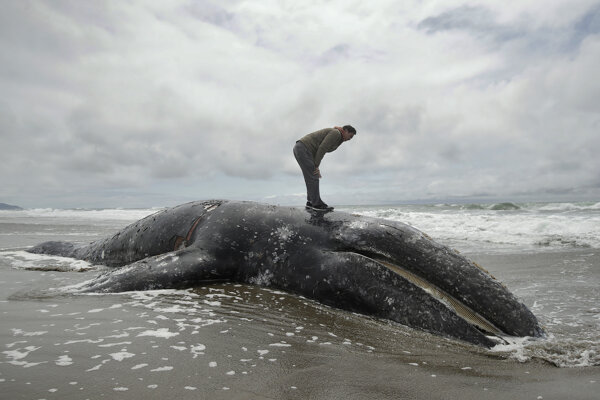 Mŕtva veľryba.