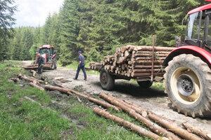 Príprava dreva v lese.