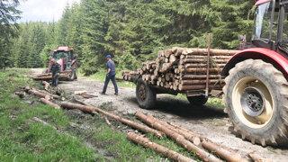 Drevo je nový bitcoin. Malé slovenské píly ničí cenová vojna