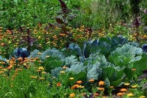 Holé hriadky ako podľa pravítka sa už nenosia. Skúste kombinovať kvety a plodiny, ktoré si rozumejú.