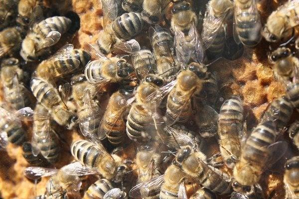 Včely majú problém.
