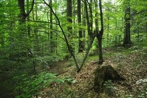 Stromy občas rastú rôznymi smermi.