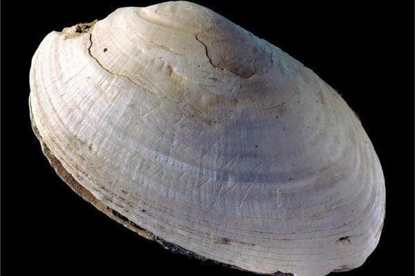 Lastúra s najstaršími známymi ryhami od praľudí.