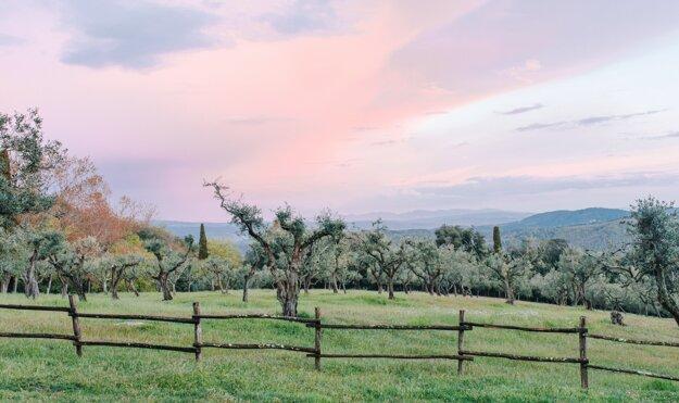 Olivové háje a vinič tvoria typický vidiecky výhľad v Toskánsku.