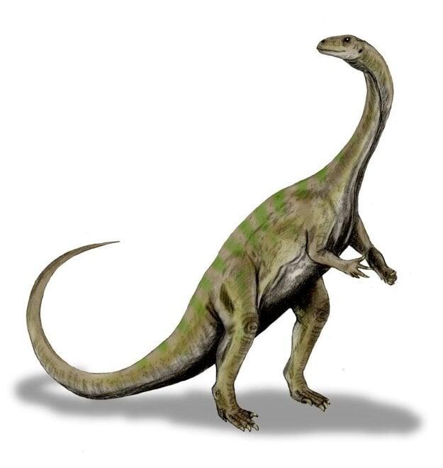 Umelecké zobrazenie druhu massospondylus carinatus. Novoobjavený plaz mohol vyzerať podobne.