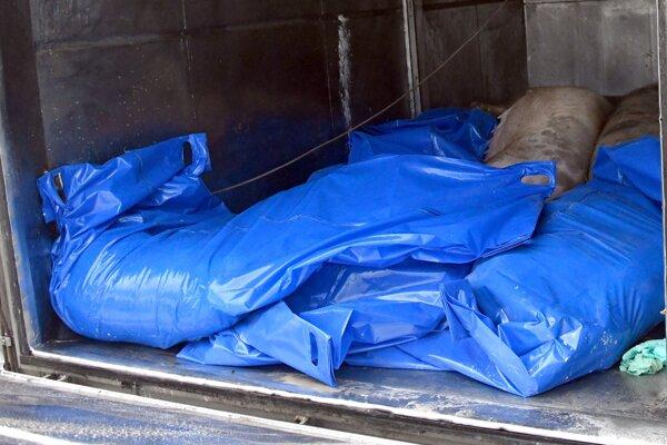 Náklad kafilérneho vozidla po vykonaní nariadeného preventívneho usmrtenia ošípaných v jednom z domácich chovov v obci Somotor časť Nová vieska pri Bodrogu, v ktorej sa potvrdil výskyt afrického moru ošípaných.