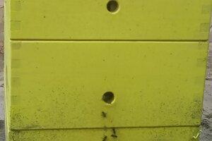 Mestské včely si vraj vedia poradiť s ťažkými kovmi aj chlórom.