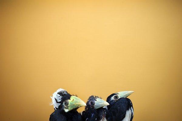 Aj mladé vtáčatá sú vypočítavé.