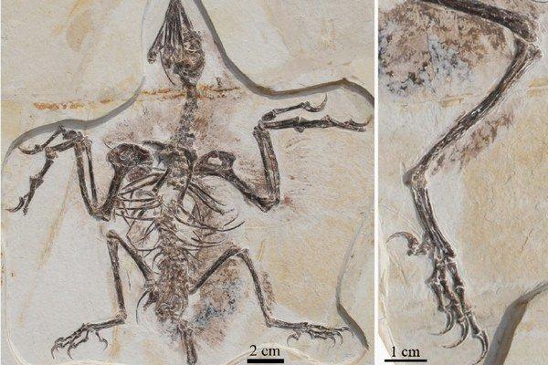 Perie mali predkovia vtákov aj na zadných nohách.