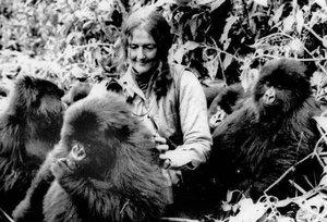 diana fosseyová svoj život venovala projektu, ktorý umožňoval študovať život vymierajúceho druhu živočícha, zviazaného s človekom dlhou spoločnou evolučnou históriou.